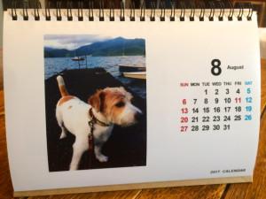 シマちゃんカレンダー1708