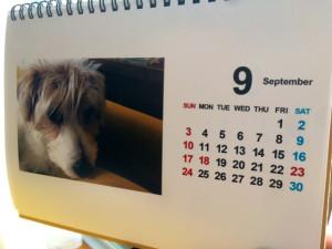 シマちゃんカレンダー