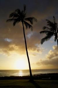 夕日と椰子の木