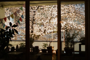 桜150330